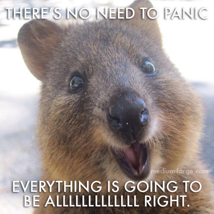 Quokka Don't Panic