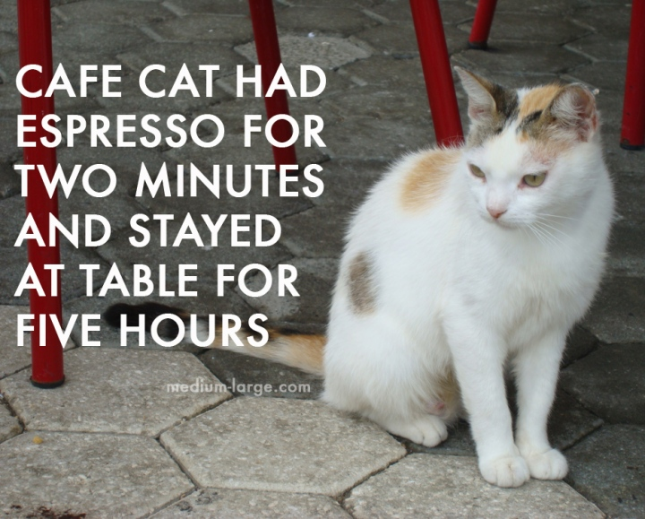 Cafe Cat Espresso 2 copy