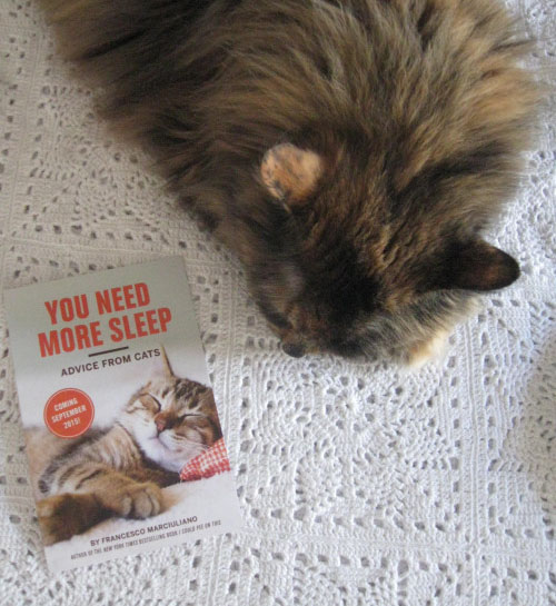 Cat Sleep Book