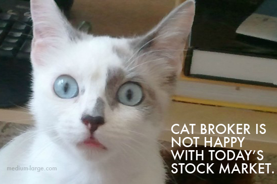 Cat Stock Broker