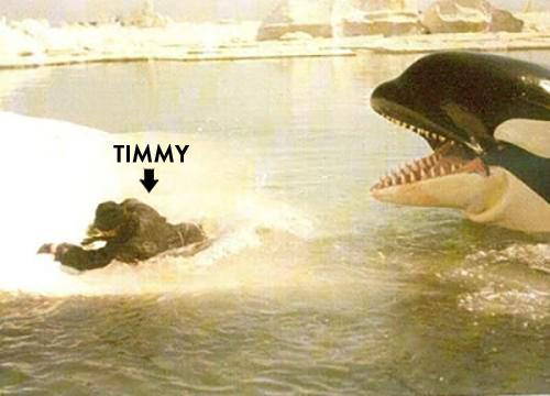 Orca Timmy 2