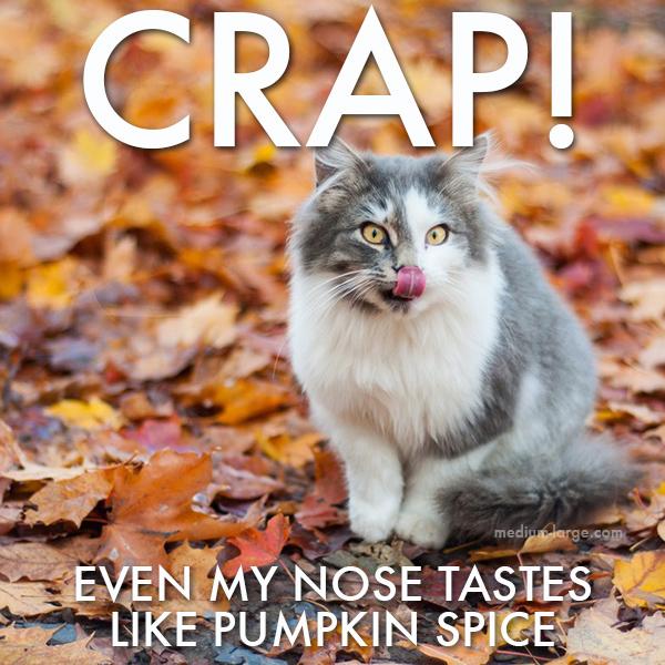 Cat Fall 1a ML