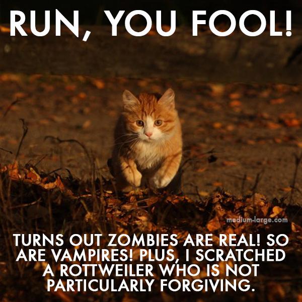 Cat Fall 3 ML