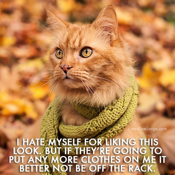 Cat Fall 4 ML