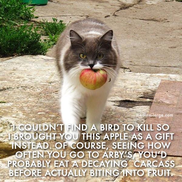 Cat Fall 6 ML