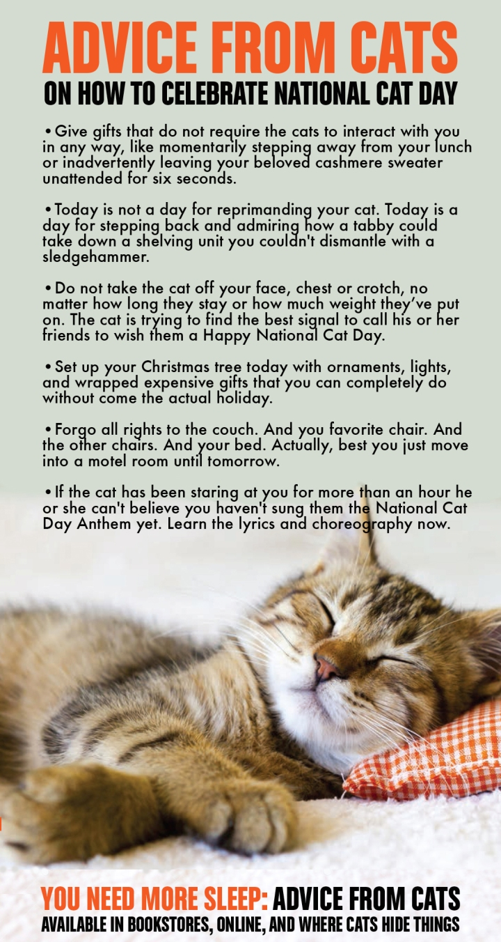 YNMS National Cat Day Advice