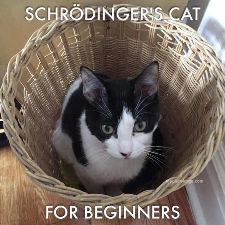 Schrodinger's Cat Leelo ML