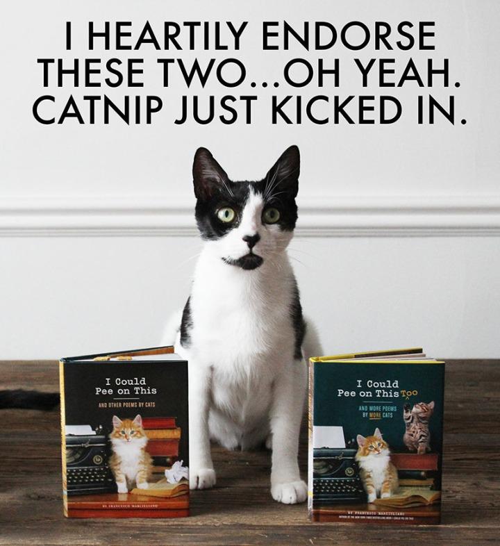 Catnip Endorsement 2 800