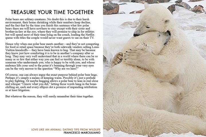 love-animal-polar-bears