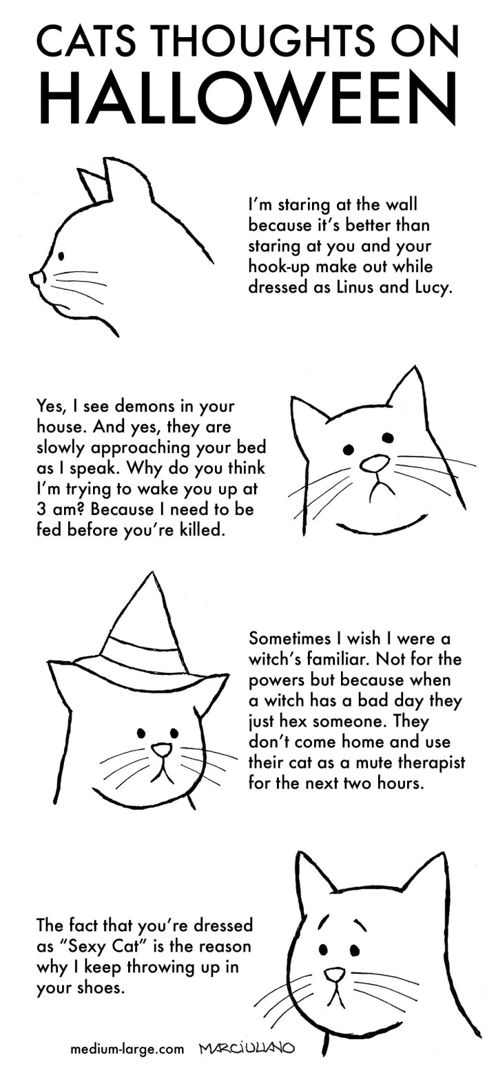 cats-thoughts-on-halloween