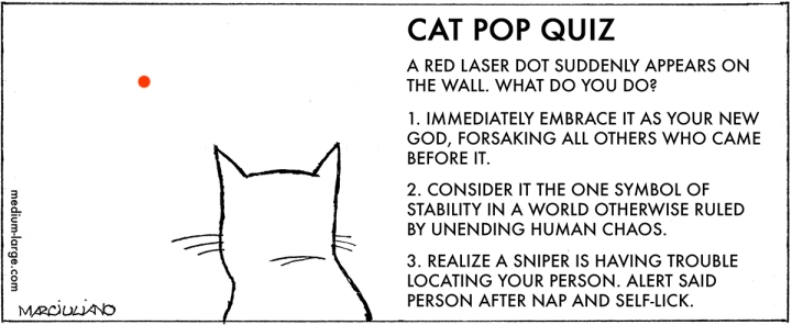 cat-red-dot-quiz-1200