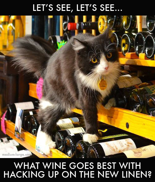 cat-wine-day-ml
