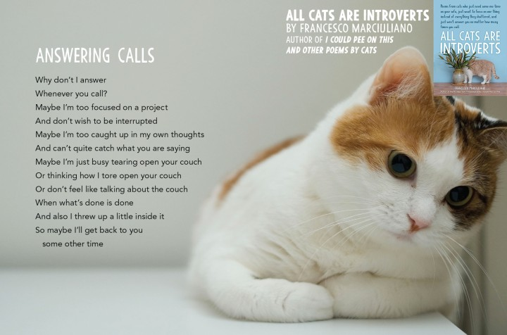 All Cats Are Introvert Answering Calls