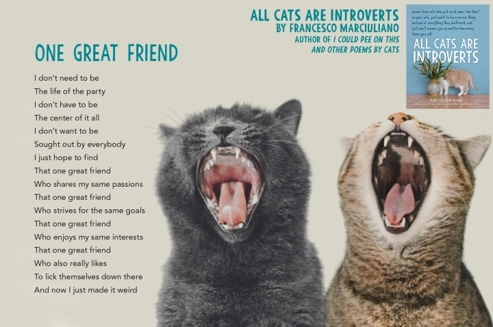 One Great Friend All Cats Are Introverts
